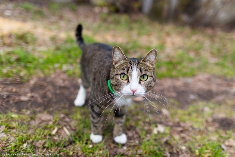Избивший кота Филю житель Колпашево получил условный срок