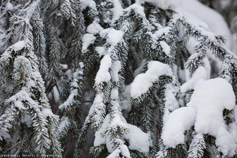 Декабрь в Томской области ожидается теплее обычного