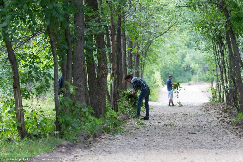 Подрядчик завершил намеченные на 2017г работы в Михайловской роще Томска