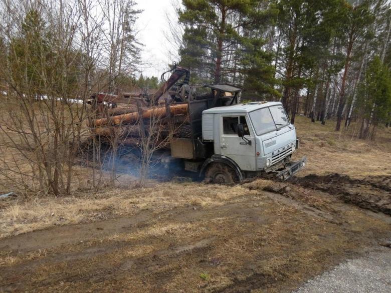 «Черный» лесоруб в Томской области срубил деревьев на 0,5 млн руб