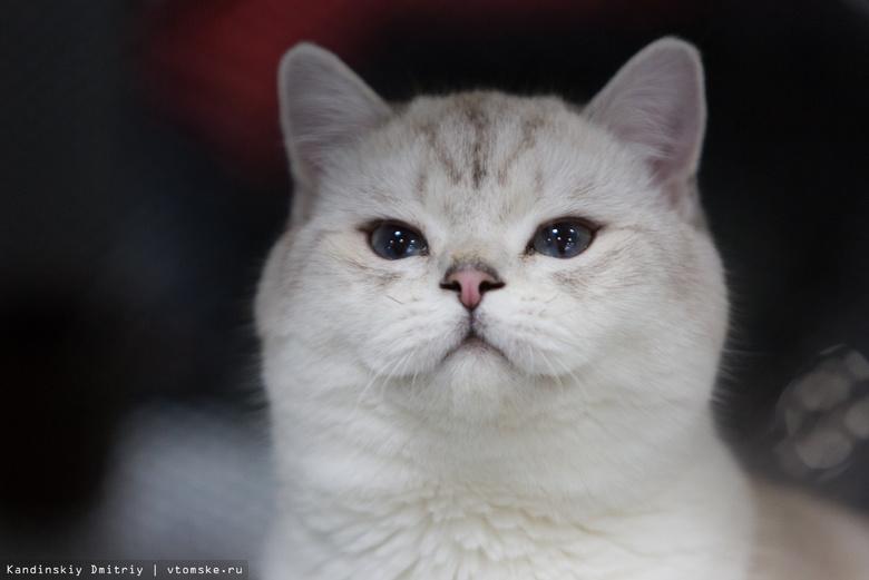 Котокафе Cat Space открылось в Томске