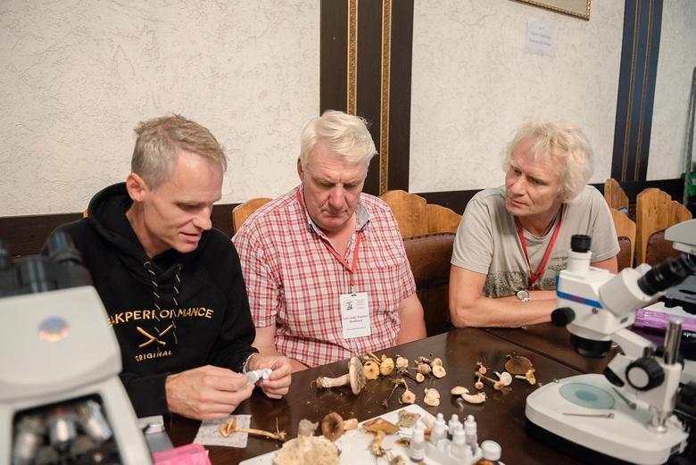 Неизвестные ранее грибы обнаружили в Томском районе