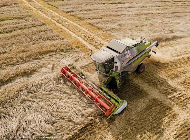 Шумит высокая пшеница: фоторепортаж с уборки урожая в Томской области