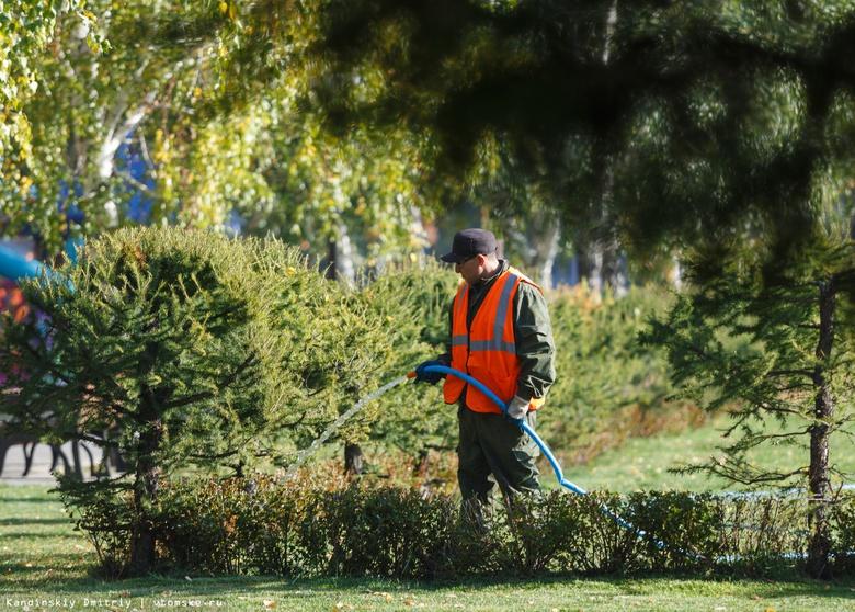 Работы по благоустройству ул. Усова начнутся в июле со сноса деревьев