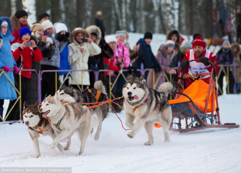 Маламуты, хаски и лайки посоревнуются в гонках на упряжках в Томске