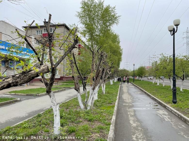 Энергетики прокомментировали ситуацию с обрезкой деревьев в Томске