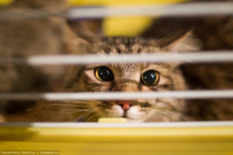 Томичи смогут забрать домой кошек из приюта на ярмарке-раздаче
