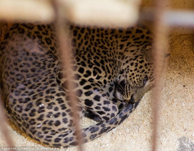 Томский мини-зоопарк в очередной раз просит горожан помочь с оплатой аренды