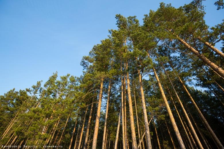 Незаконную рубку сосен на 400 тыс руб выявили в Томской области