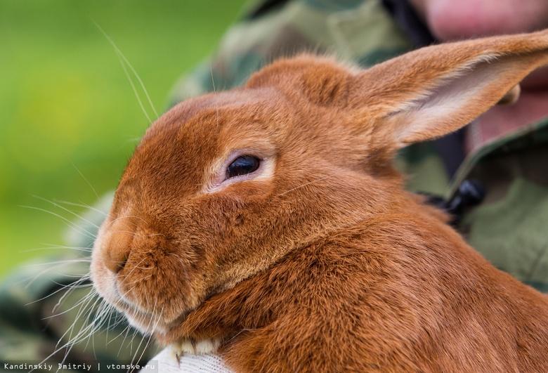 Владелица кроличьей фермы в Асино рискует потерять бизнес, если не отдаст 11 млн руб долга