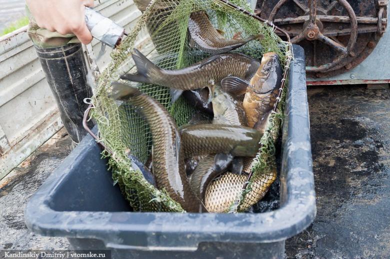 Суточные нормы добычи рыбы для рыбаков-любителей установили в Томской области