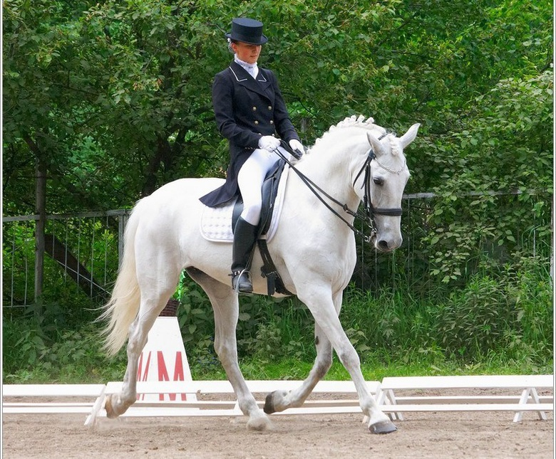 ТДСК не будет выселять конные клубы