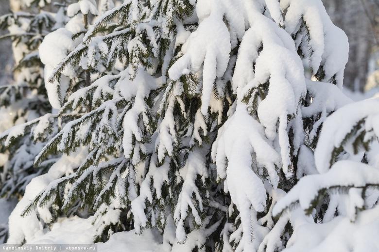 Усиленное патрулирование лесов началось в Томской области перед Новым годом