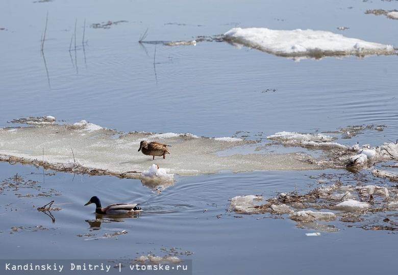 В МЧС рассказали о паводковой обстановке в Томской области