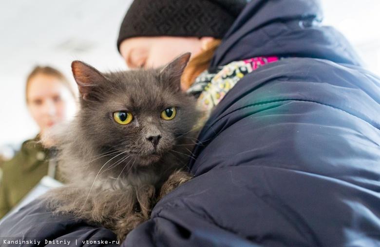 Найти новый дом: около 30 котов ждут хозяев на ярмарке-раздаче в Томске