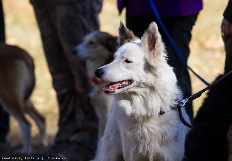 Собаки-инвалиды пробегут в Томске кросс «Шустрый пес»
