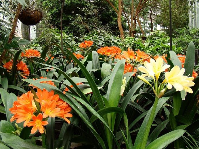 В Ботсаду зацвела «королева комнатных растений»