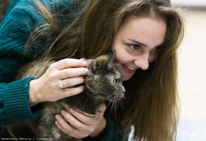 Томское котокафе за полгода работы помогло 5 животным найти дом