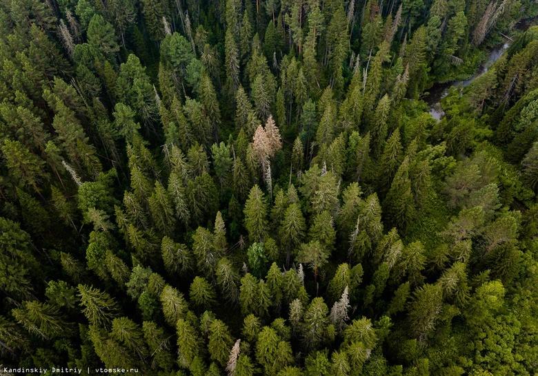 Пожилой томич заблудился в лесу, собирая дикоросы