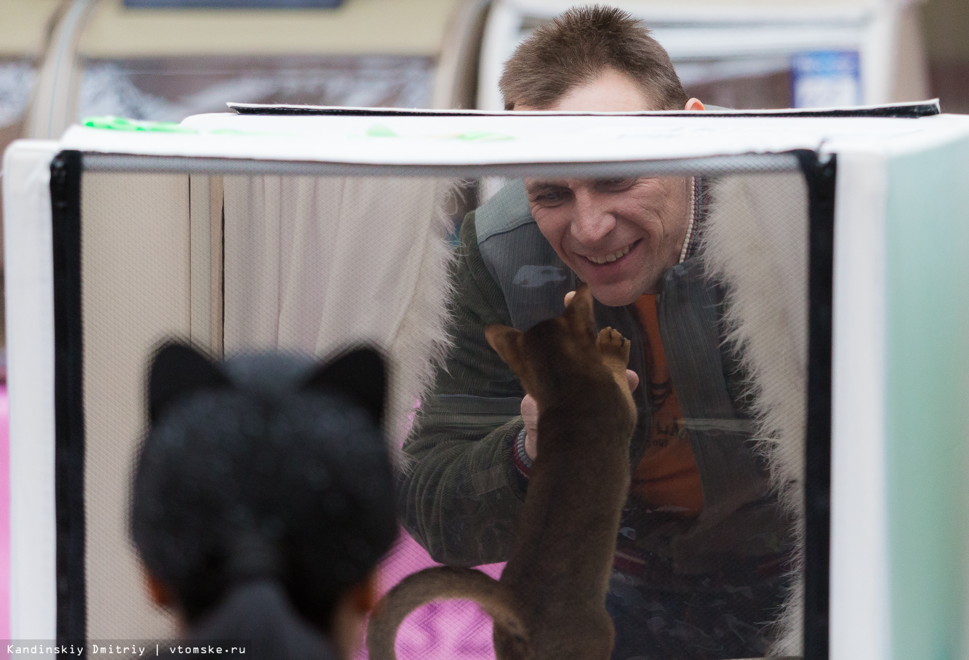 От британцев до мэйнкунов: в Томске открылась выставка «Магия кошек»