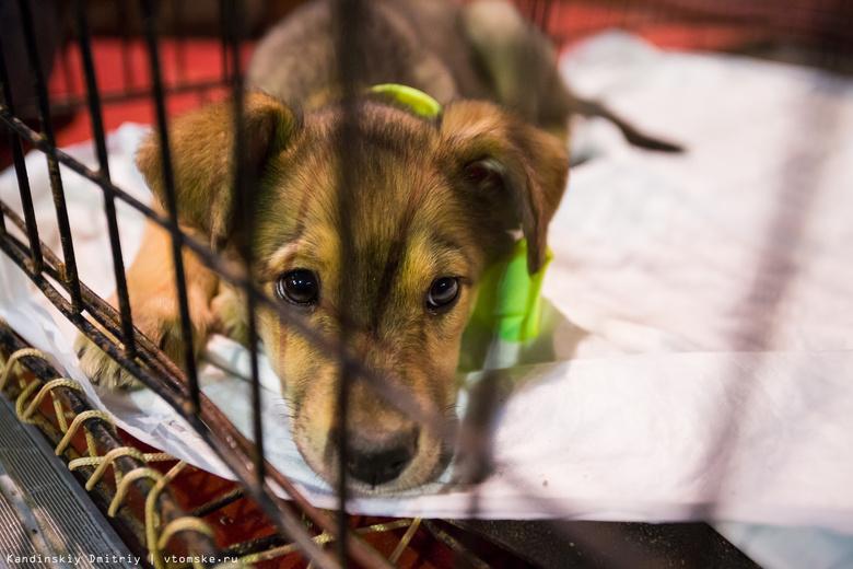 Чаще всего в 2016г томичи жаловались в ветнадзор на жестокое обращение с животными