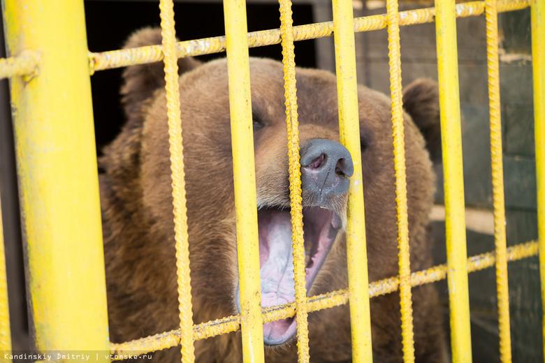 Пусть ее медведи ебут
