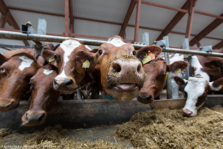 Томичи в 2017г чаще всего жаловались в ветнадзор на запах и шум от сельхозживотных