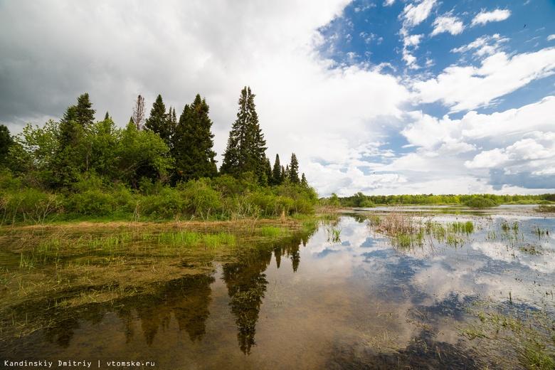 Порядка45 кгособей карпа выпустили в томское озеро Лебяжье