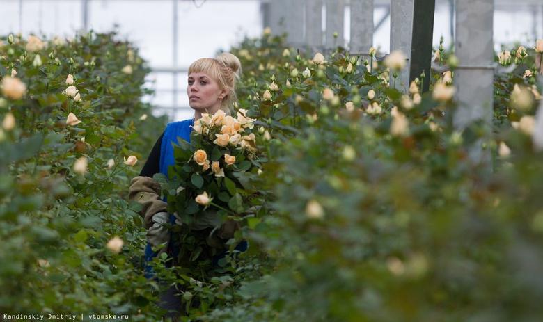 Бегонии, розы и кохии украсят томские клумбы в 2019г