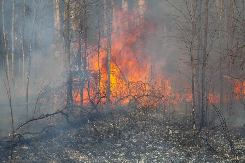Ученые Томска и Германии выяснят, как дым от лесных пожаров влияет на климат Земли