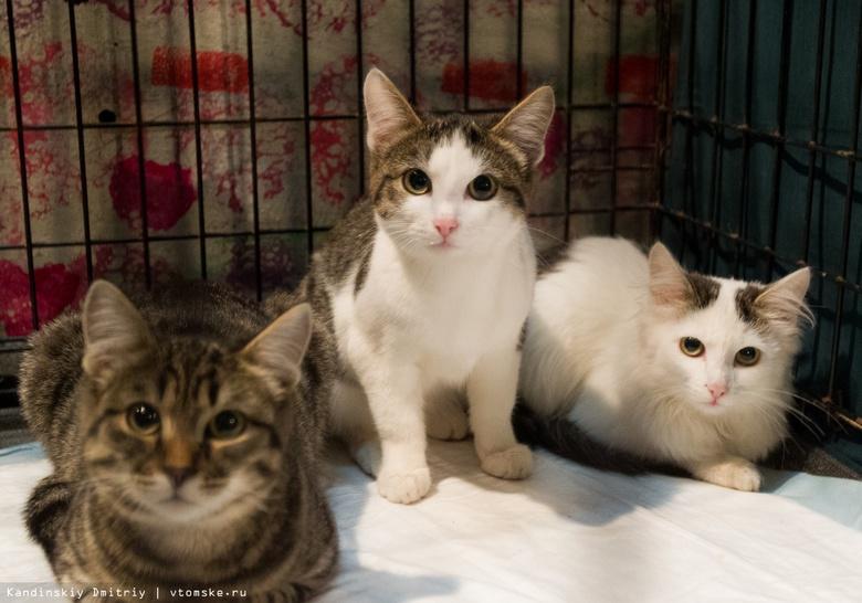 Томичи смогут найти себе домашнего питомца на ярмарке-раздаче котов