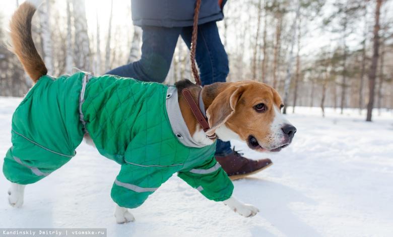 В отпуск с питомцем: где в Томске оформить документы для выезда с животным за границу