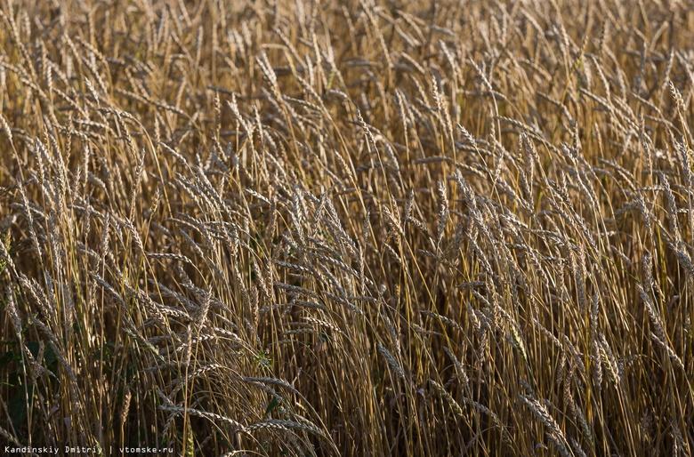 Аграрии Томской области выполнили план по севу зерновых на 85%