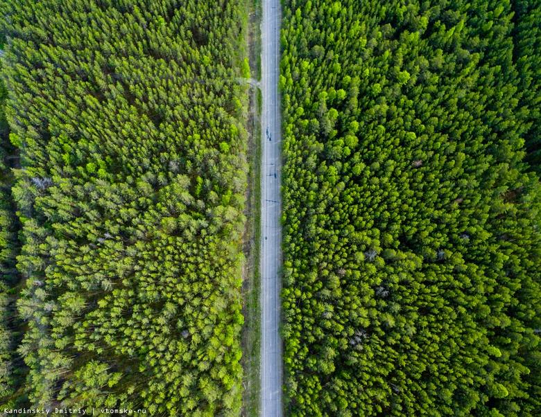 Власти: компании Китая арендуют в Томской области более 1 млн га леса