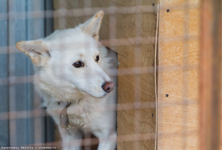«Верный друг»: у напавшей на юную томичку собаки есть хозяин