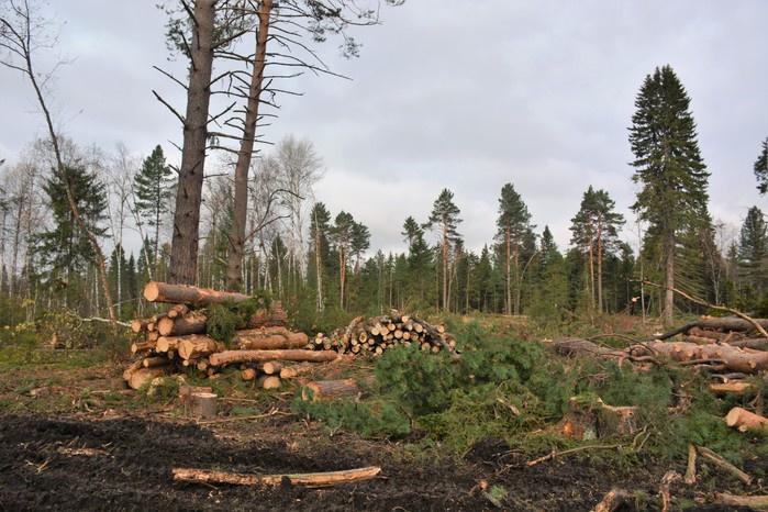 В Томском районе уничтожили лес почти на 4 млн рублей