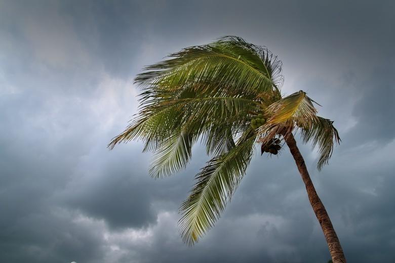 Число погибших из-за тайфуна в Японии выросло до 14 человек