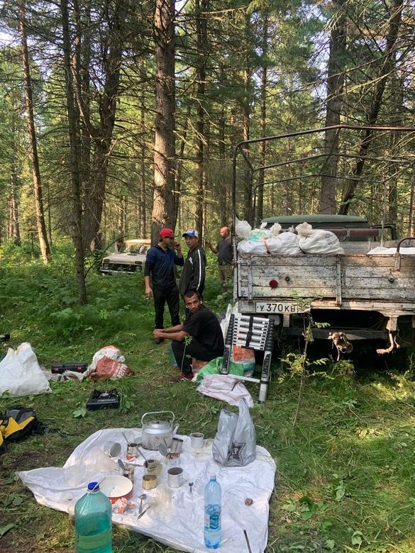 Группу новосибирцев задержали в Томской области за незаконный сбор шишек