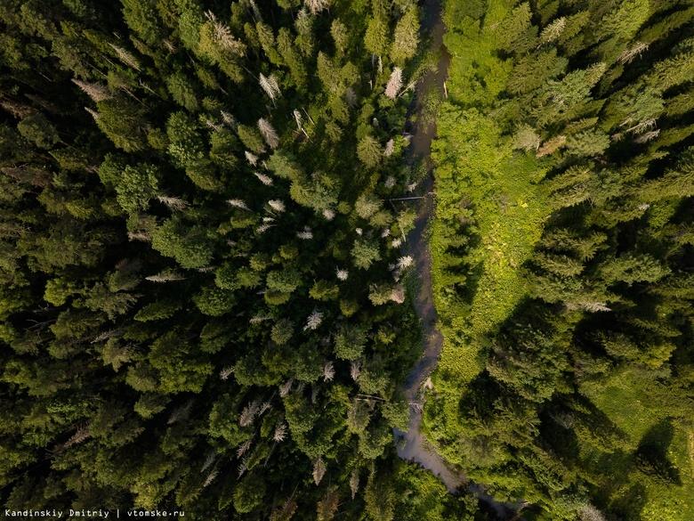 Томские ученые научили дронов определять зараженные вредителями леса