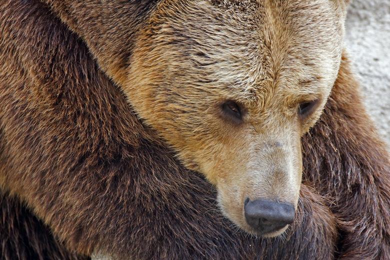 Следы медведя обнаружили возле деляны в Чаинском районе
