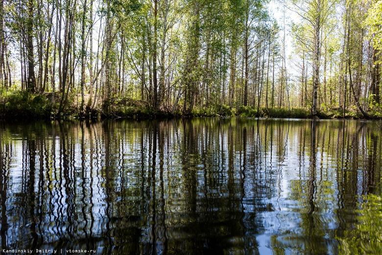 Ученые: озера в арктической зоне РФ превращаются в болота
