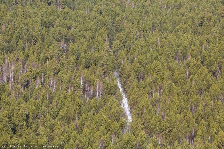 Лесничий в Томской области безосновательно разрешил санитарную рубку деревьев