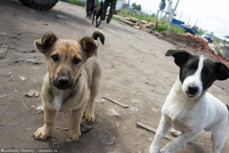 «Верный друг» за 9 месяцев отловил в Томске почти 3 тыс бездомных собак