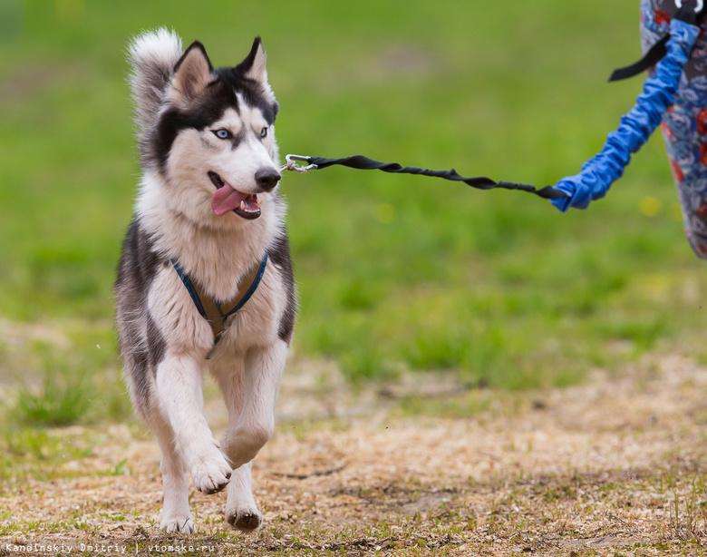 В Томске впервые пройдет благотворительный забег с собаками
