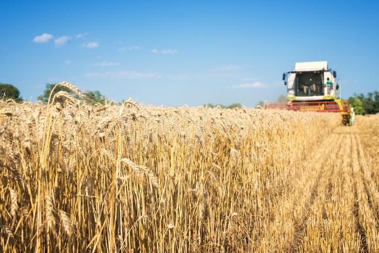 Как надежно защитить посевы зерновых?