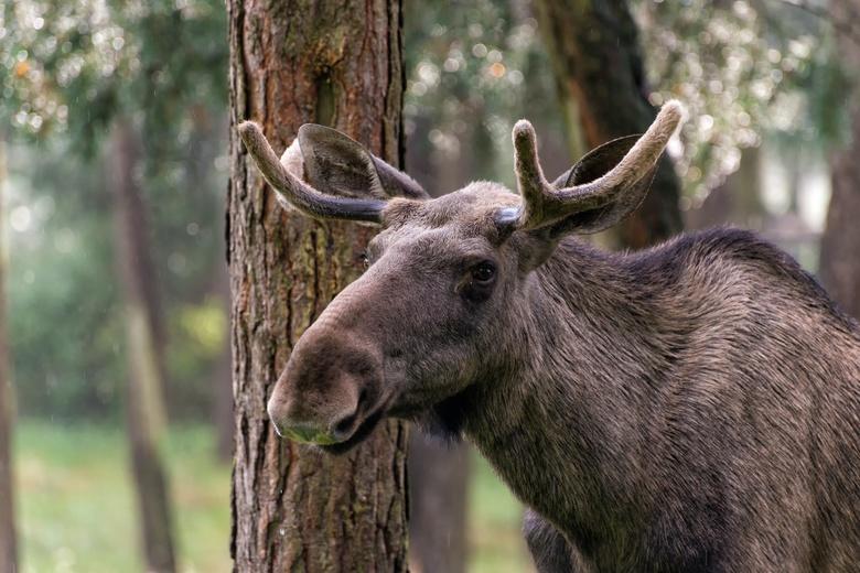 Власти утвердили на год лимиты на отстрел диких животных в Томской области