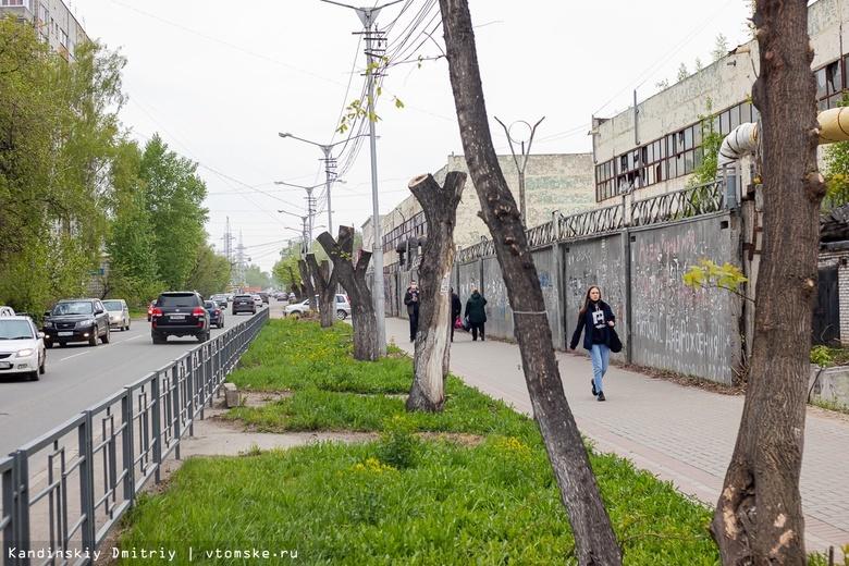 Ампутанты на улицах: что происходит в Томске с деревьями?
