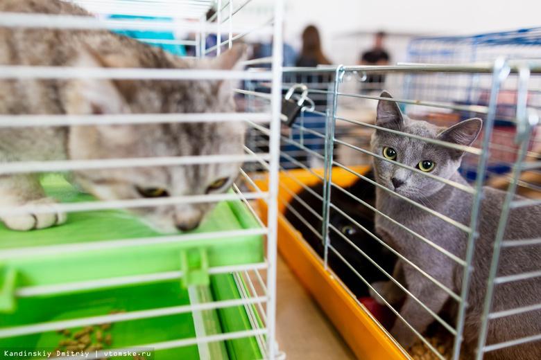 Дымок, Елисей, Мышка и еще 20 котов ждут томичей в воскресенье на ярмарке-раздаче