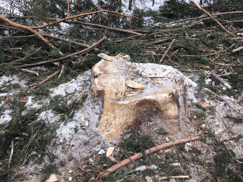 Депутат Госдумы попросила Бастрыкина взять под контроль расследование рубки леса в Батурино