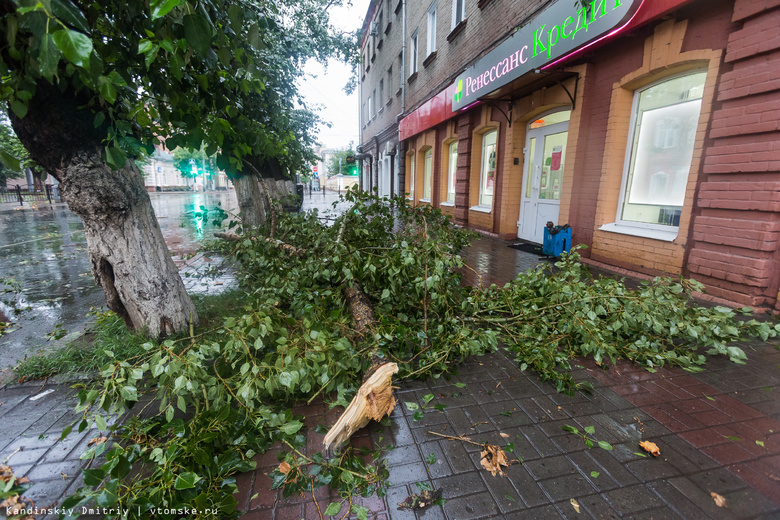 Сильный ветер повалил деревья и обесточил некоторые дома в Томске